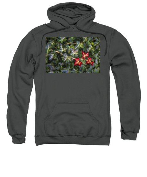 Sweatshirt featuring the photograph Fall Ivy Leaves by Adam Romanowicz