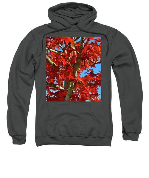 Fall Stars Sweatshirt