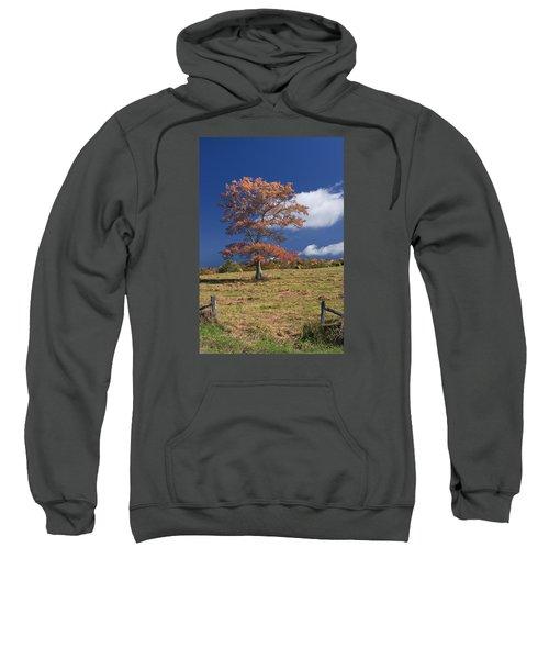 Fall Tree Sweatshirt