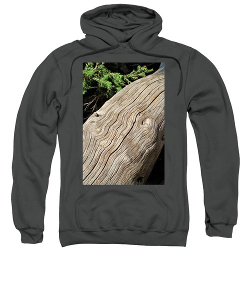 Fallen Fir Sweatshirt