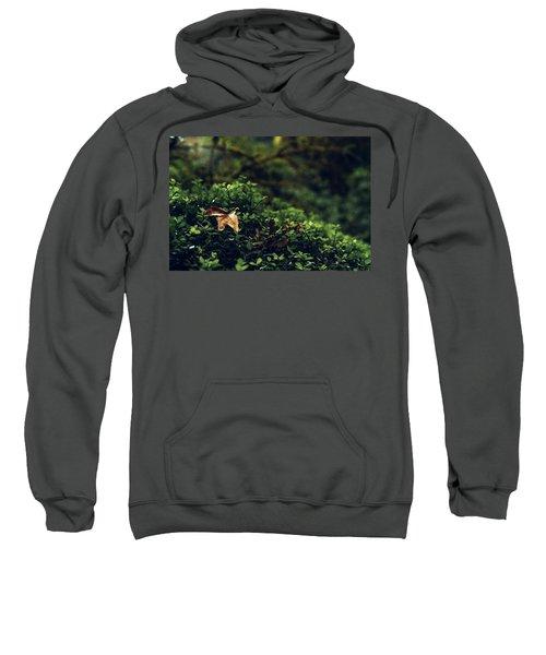 The Fallen Sweatshirt