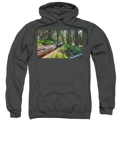 Fallen Tree- Sweatshirt