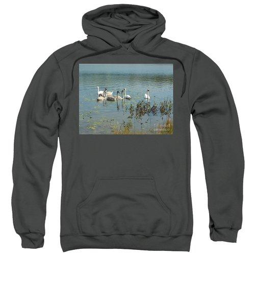 Family Of Swans Sweatshirt