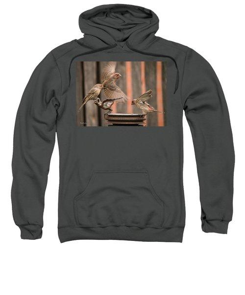 Feeding Finches Sweatshirt