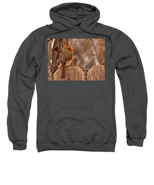 Female Cardinal On The Fence Sweatshirt