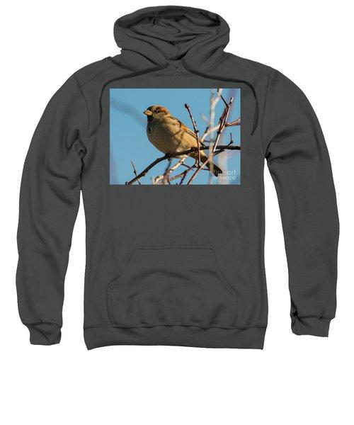 Female House Sparrow Sweatshirt by Mike Dawson