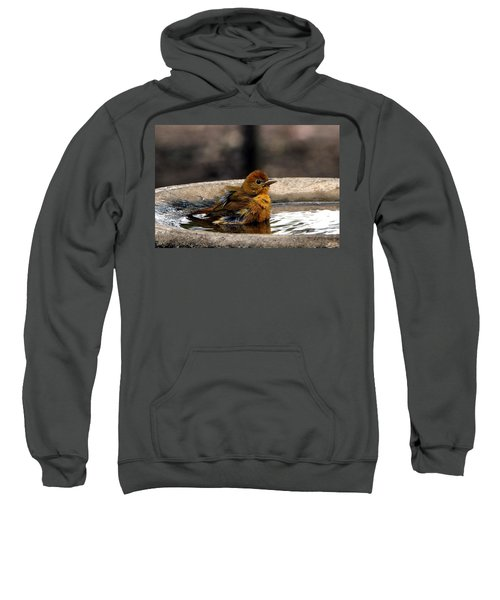 Female Summer Tanager In Bird Bath Sweatshirt