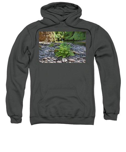 Ferns Along Banks Of Eagle Creek Sweatshirt