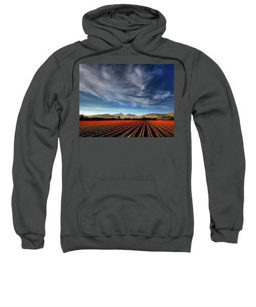 Field Of Color Sweatshirt