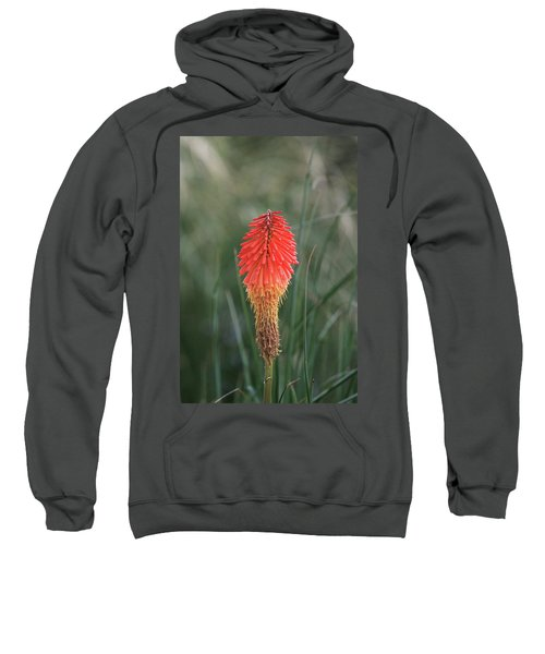 Firecracker Sweatshirt