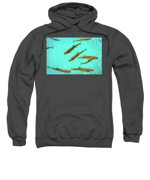 Fish School In Turquoise Lake - Plitvice Lakes National Park, Croatia Sweatshirt