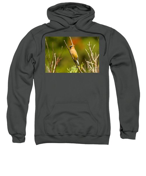 Fishercap Cedar Waxwing Sweatshirt