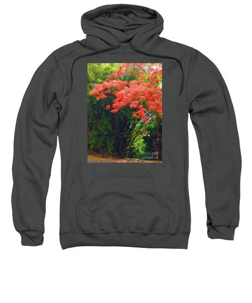 Flamboyant With Bamboo Sweatshirt