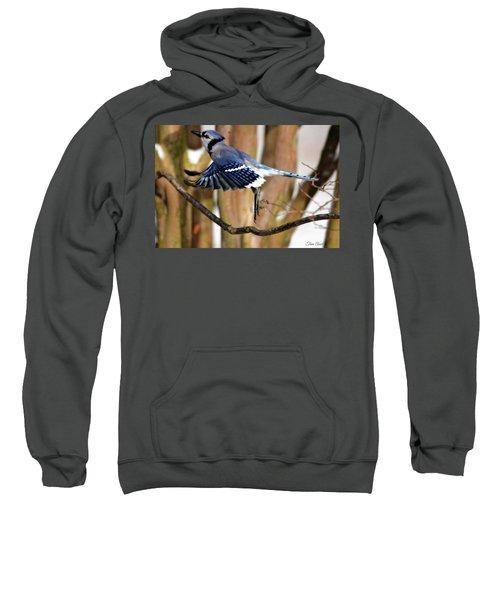 Flight Of The Blue Jay Sweatshirt