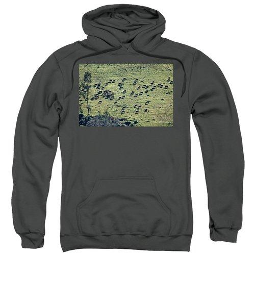 Flock Of Sheep Sweatshirt