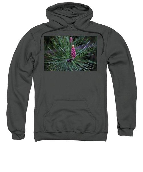 Flowering Pine Cone Sweatshirt