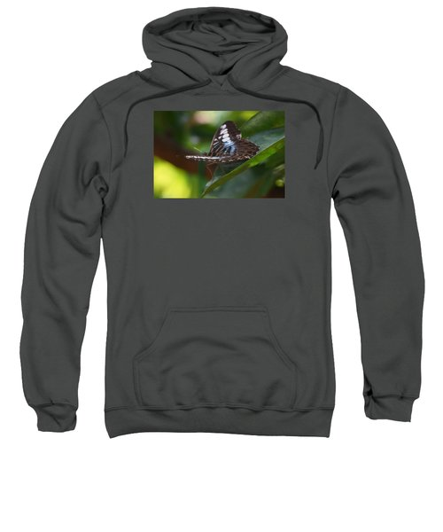 Flying High 3 Sweatshirt