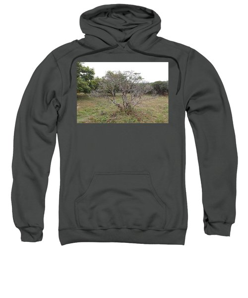 Forest Character Tree Sweatshirt