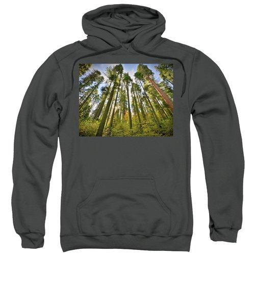 Forest Of Light Sweatshirt