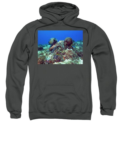 French Angelfish And The Green Turtle Sweatshirt