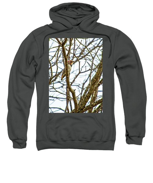 Frisky Flicker Sweatshirt