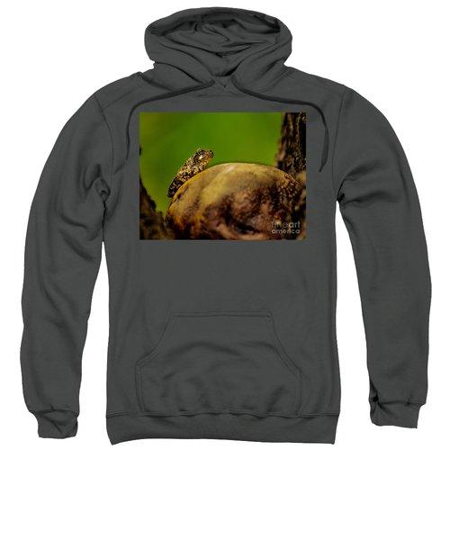 Frog Waits Sweatshirt
