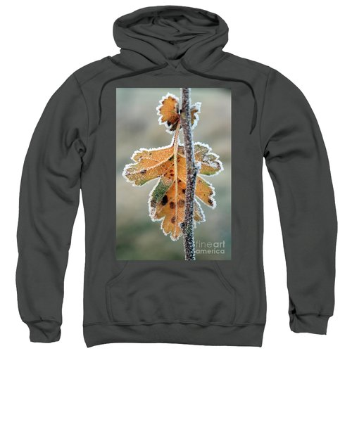Frosty Leaf Sweatshirt