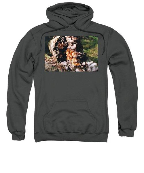 Fungus Is Beautiful Sweatshirt