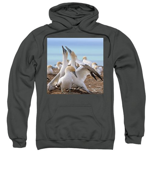 Sweatshirt featuring the photograph Gannets by Werner Padarin