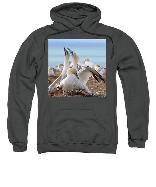 Gannets Sweatshirt