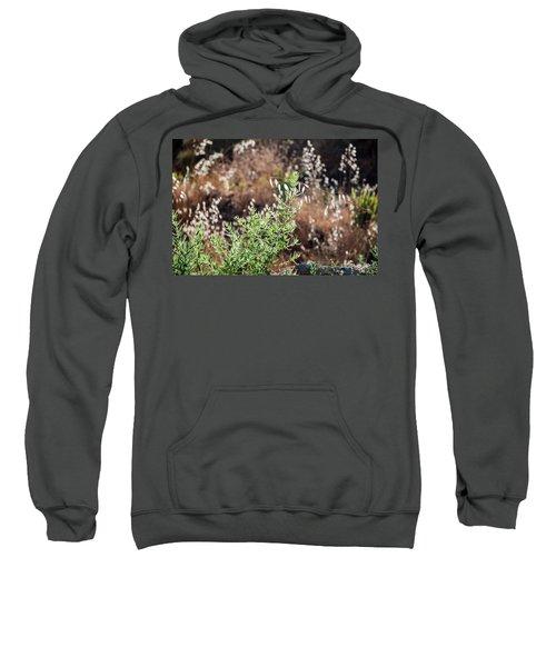 Garden Contre Jour 2 Sweatshirt