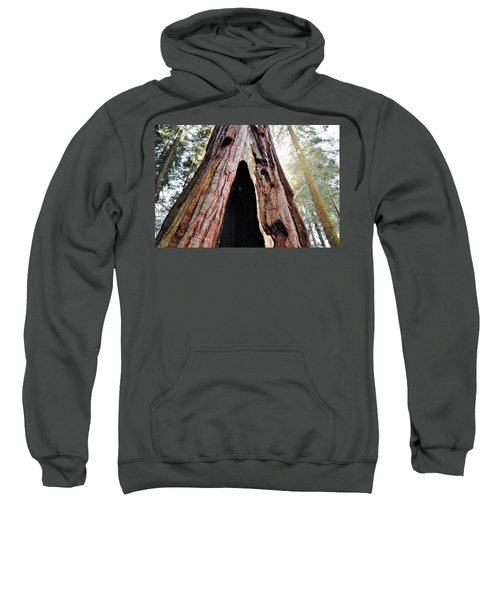Giant Forest Giant Sequoia Sweatshirt