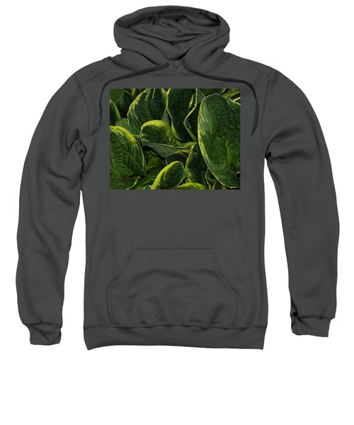 Giant Hosta Closeup Sweatshirt