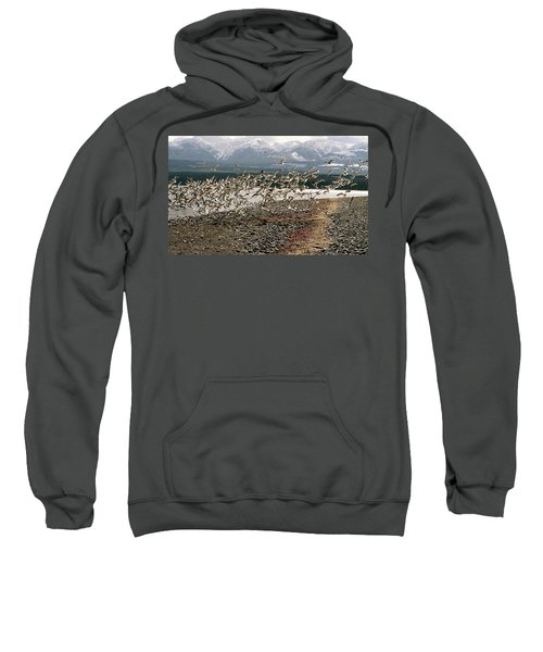 Gift From The Sea Sweatshirt