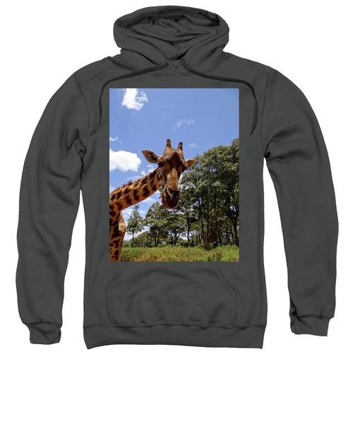 Giraffe Getting Personal 4 Sweatshirt