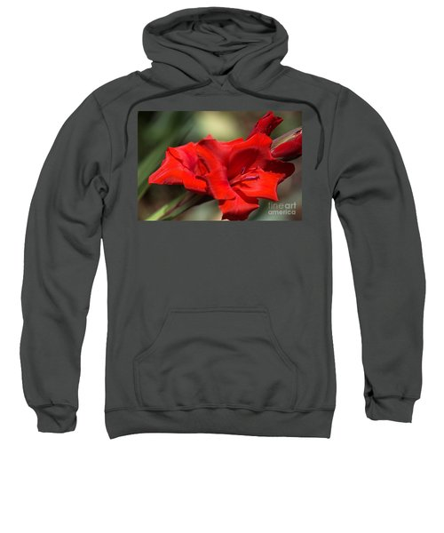 Gladioli Manhattan Variety  Sweatshirt