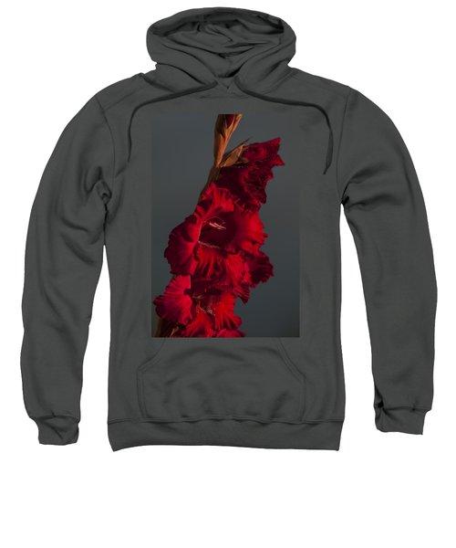 Gladiolus Against A Dark Cloud Sweatshirt