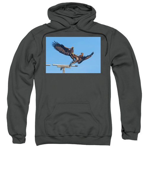 Golden Eagle Courtship Sweatshirt