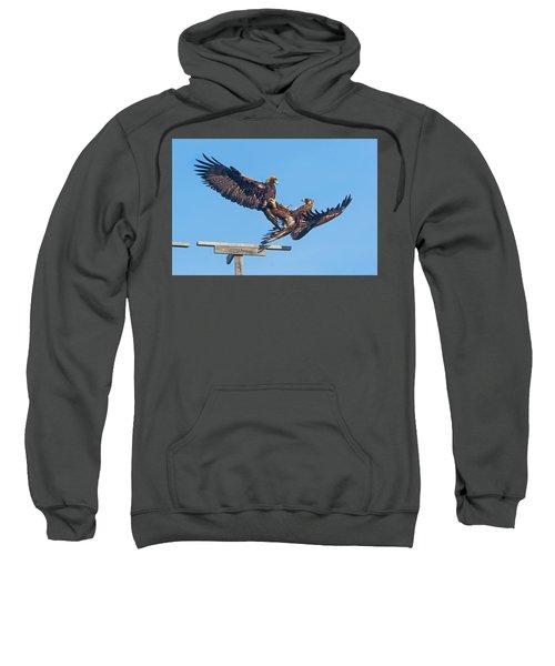 Golden Eagle Courtship Sweatshirt