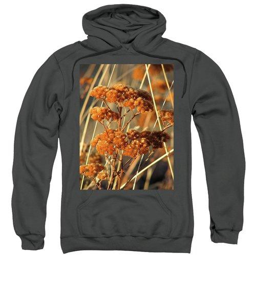 Golden Reach Sweatshirt