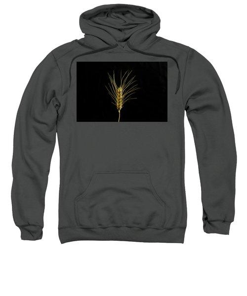 Golden Wheat Sweatshirt
