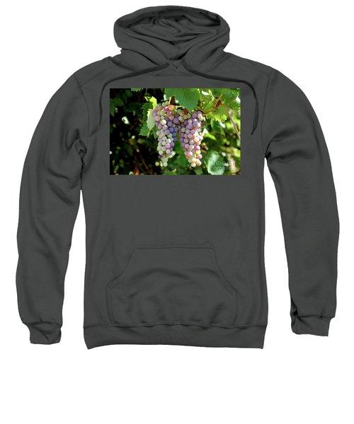 Grapes In Color  Sweatshirt