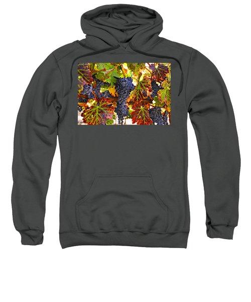 Grapes On Vine In Vineyards Sweatshirt
