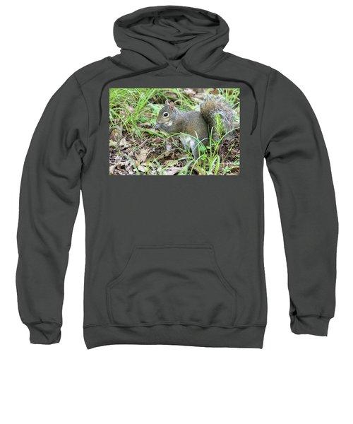 Gray Squirrel Eating Sweatshirt