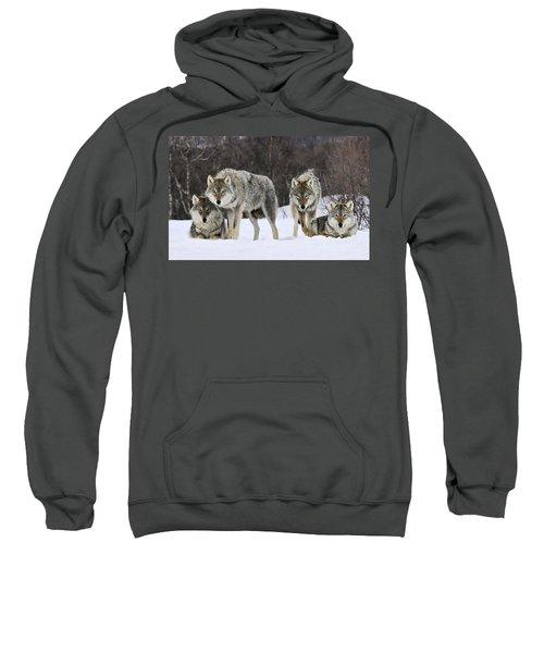 Gray Wolves Norway Sweatshirt