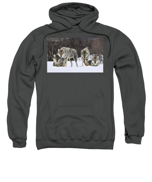 Gray Wolves Norway Sweatshirt