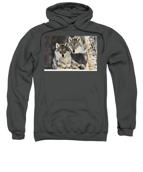 Gray Wolf Canis Lupus Pair In The Snow Sweatshirt
