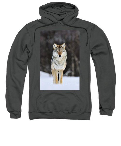 Gray Wolf In The Snow Sweatshirt