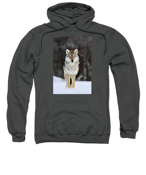 Gray Wolf In The Snow Sweatshirt