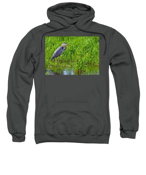 Great Blue Heron Waiting Sweatshirt